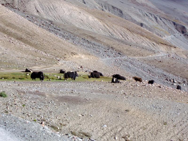 Chandra Tal Road