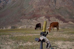 Camping in Zanskar