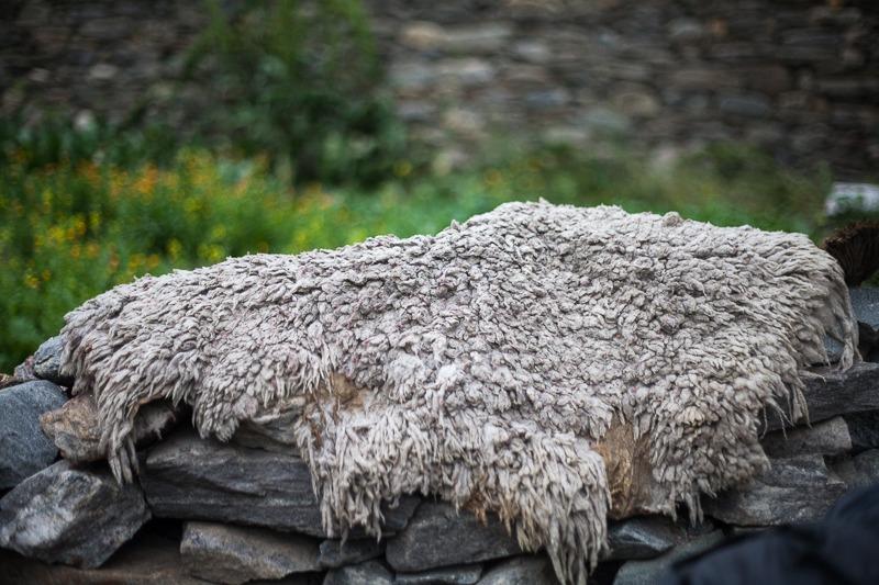 Sheepskin in Parkachik Village