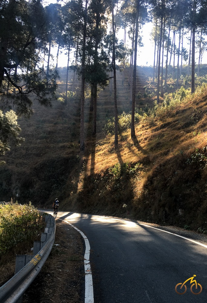 cycling through pine forests